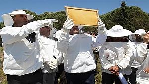 Bozcaada'da Arıcılık Geliştiriliyor