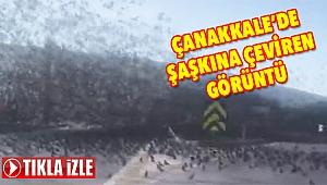 Çanakkale'de binlerce sığırcık yolu kapattı!