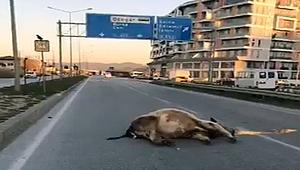 Çanakkale'de ilginç kaza!
