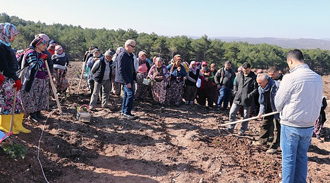 Verimli ormanlarla köylünün bütçesine katkı