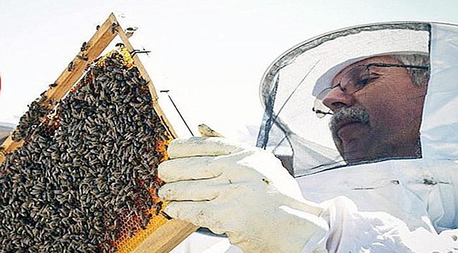 Gökçeada arısı artık tescilli!
