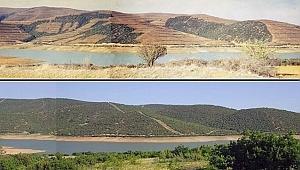 1 milyon 138 bin 970 dekar alanda ağaçlandırma!