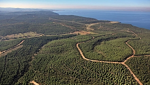 Çanakkale Orman Bölge 3,5 milyon fidan üretti