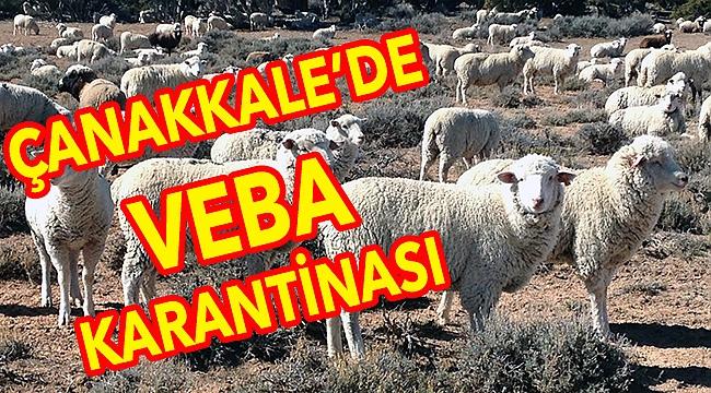 32 mahalle ve köyde hayvan hareketleri kısıtlandı!