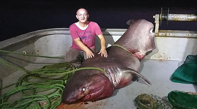 Çanakkale sularında dev köpek balığı yakalandı!