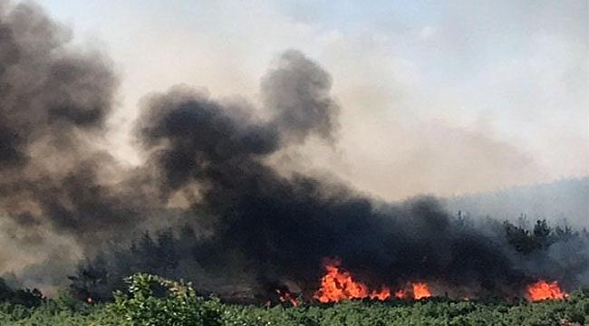 Komşu ilde orman yangını! Çanakkale'den ekipler de gitti