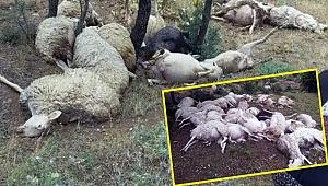 Yıldırım düştü 16 koyun telef oldu!