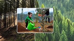 Ağaçlandırmada Köylere Hibe Desteği