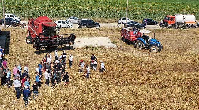 Bin yıllık miras Karakılçık Buğdayında hasat zamanı