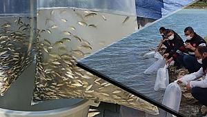 Çanakkale'de 60 bin yavru balık suyla buluştu
