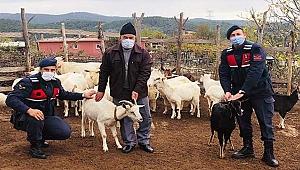Kayıp koyunlar drone yardımıyla bulundu!