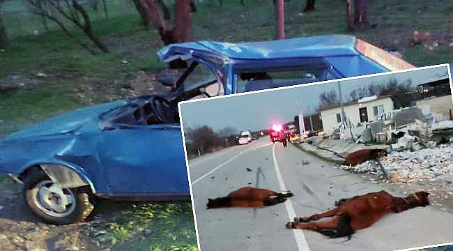 Karayoluna çıkan atlara 2 otomobil çarptı!