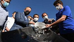 22 bin yavru balık Çanakkale Boğazına bırakıldı